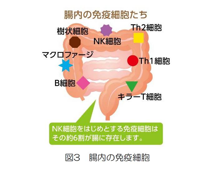 図3 腸内の免疫細胞