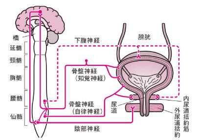 脳卒中やパーキンソン病等